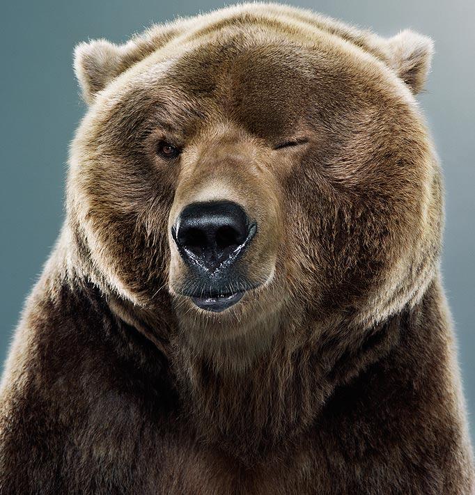 bear-blinkkig-eyes